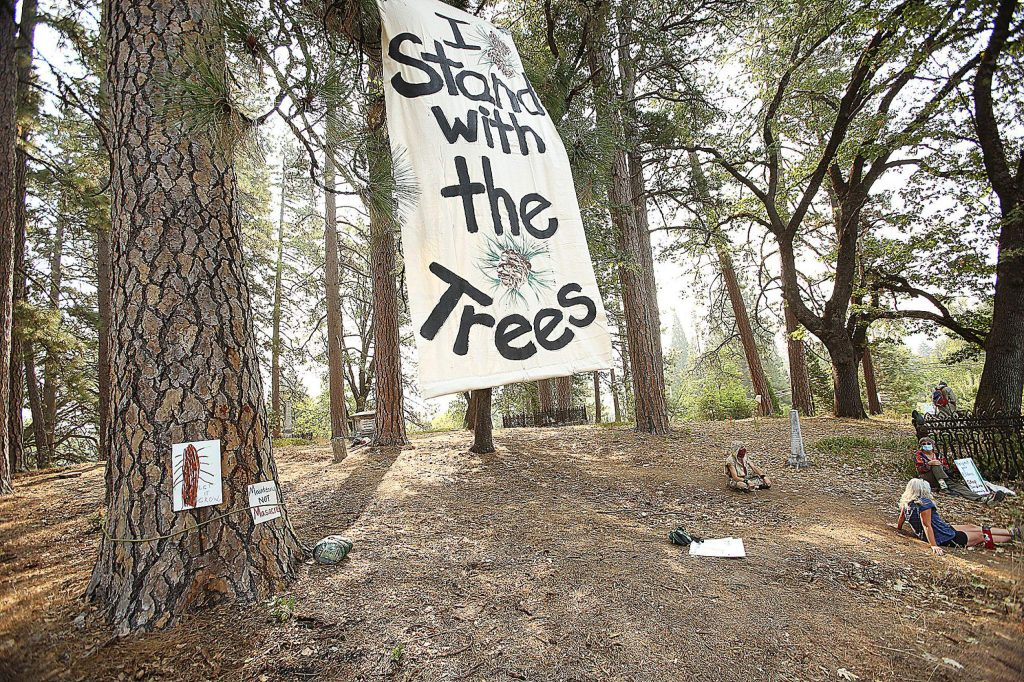 A sign hangs from the tree of a large Ponderosa Pine tree standing in Nevada City's Pioneer Cemetery, slated to be cut down by PG&E contractors this week. Protesters say that this tree is far from the PG&E right-of-way.