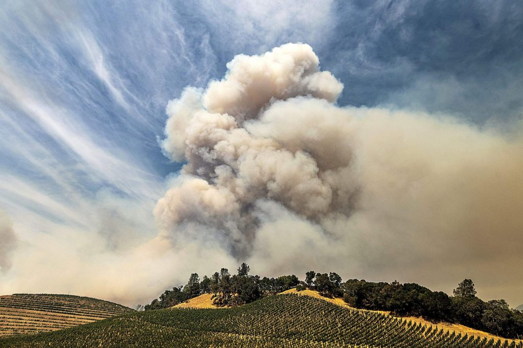 A plume rises over a vineyard in unincorporated Napa County as the Hennessey Fire burns, Aug. 18. Smoke from the West Coast wildfires has tainted grapes in some of the nation's most celebrated wine regions. The resulting ashy flavor could spell disaster for the 2020 vintage.