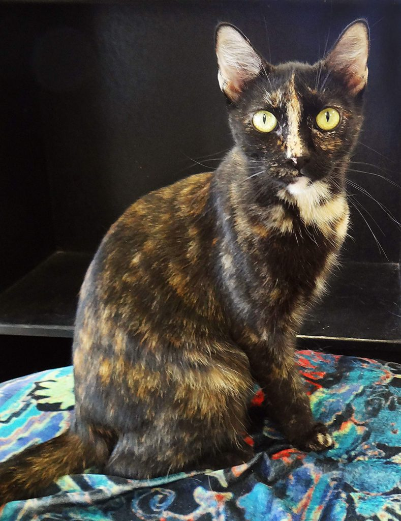 Starla is just one of thousands of cats adopted through AnimalSave.
