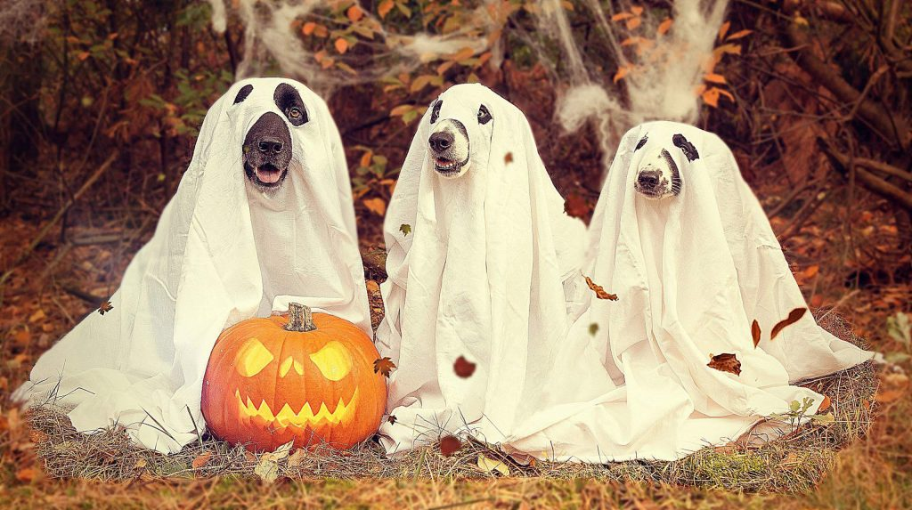 Cooler temperatures — and pumpkins piled high in front of almost every store — are sure signs that autumn is officially upon us. And with October comes that favorite American holiday: Halloween. So what does Halloween have to do with dogs?