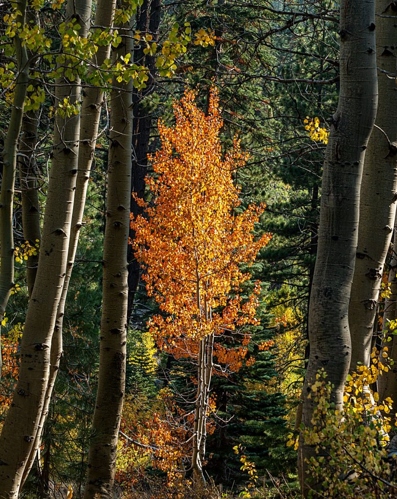 Fall colors have arrived on the trail from Spooner Campground to Marlette Lake.