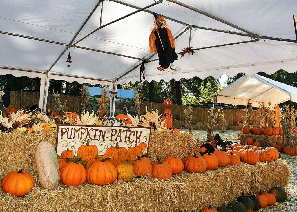 The Haunted Pumpkin Patch across from the Nevada County Fairgrounds.