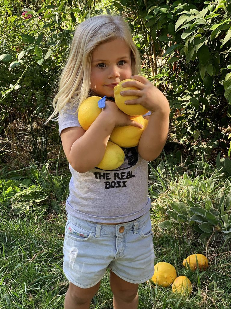 Granddaughter Wavorly picking lemons from Grandma's tree in Rough and Ready.