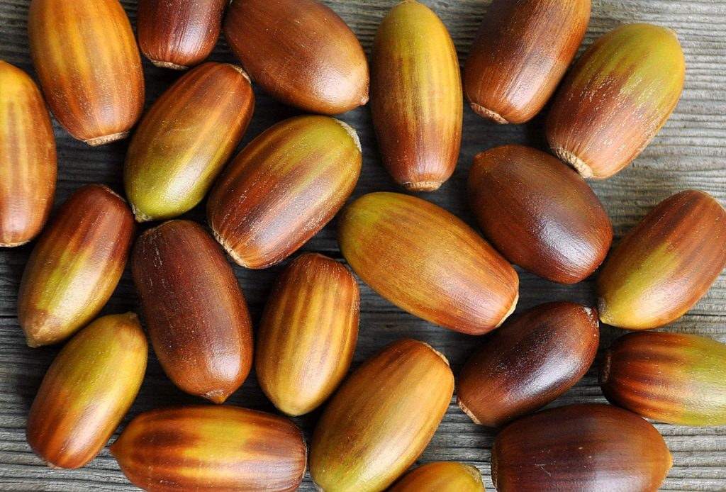 I'm drawn to both the dark brown acorns as well as those with stripes and multiple shades of color. By rubbing them in my hands while I walk, I'm able to