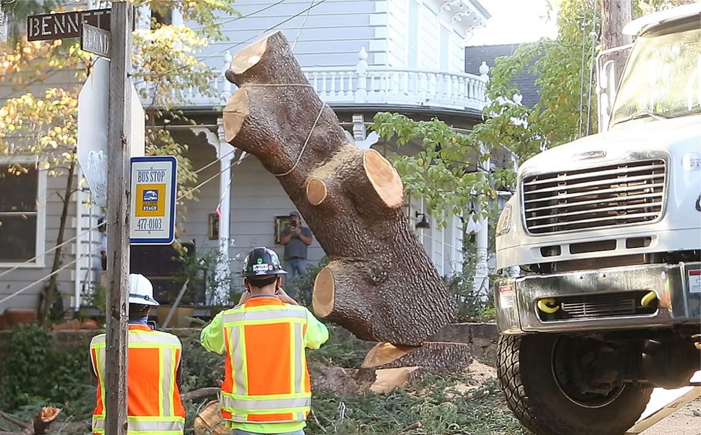 """What's left of """"Bella"""" the blue Atlas cedar is cut and toppled by PG&E workers Thursday at the corner of Bennet and Broad streets in Nevada City. The tree was at the center of a fight by residents to save it from being cut."""