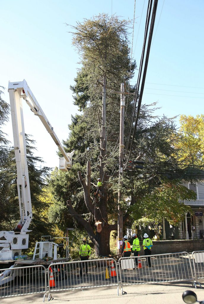 """A custom boom truck was used to cut away at """"Bella,"""" the Nevada City blue Atlas tree cut down by PG&E."""