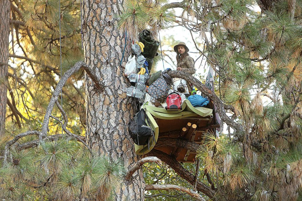 A tree sitter referred to as