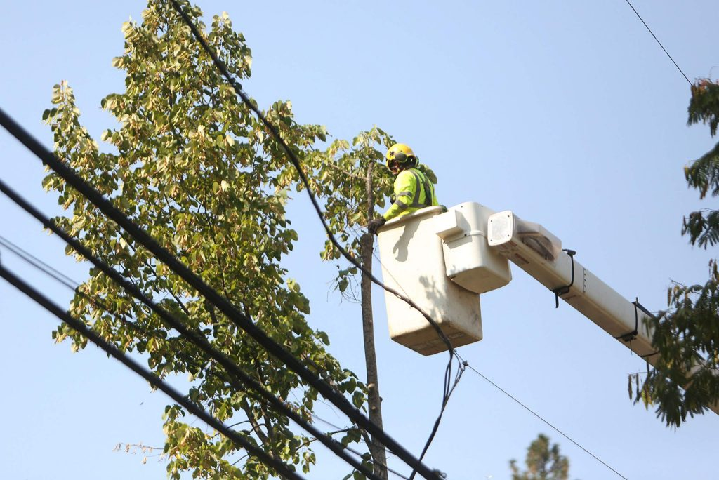PG&E contractors work on the removal of trees along Broad Street Friday in Nevada City, where utility lines run above ground.