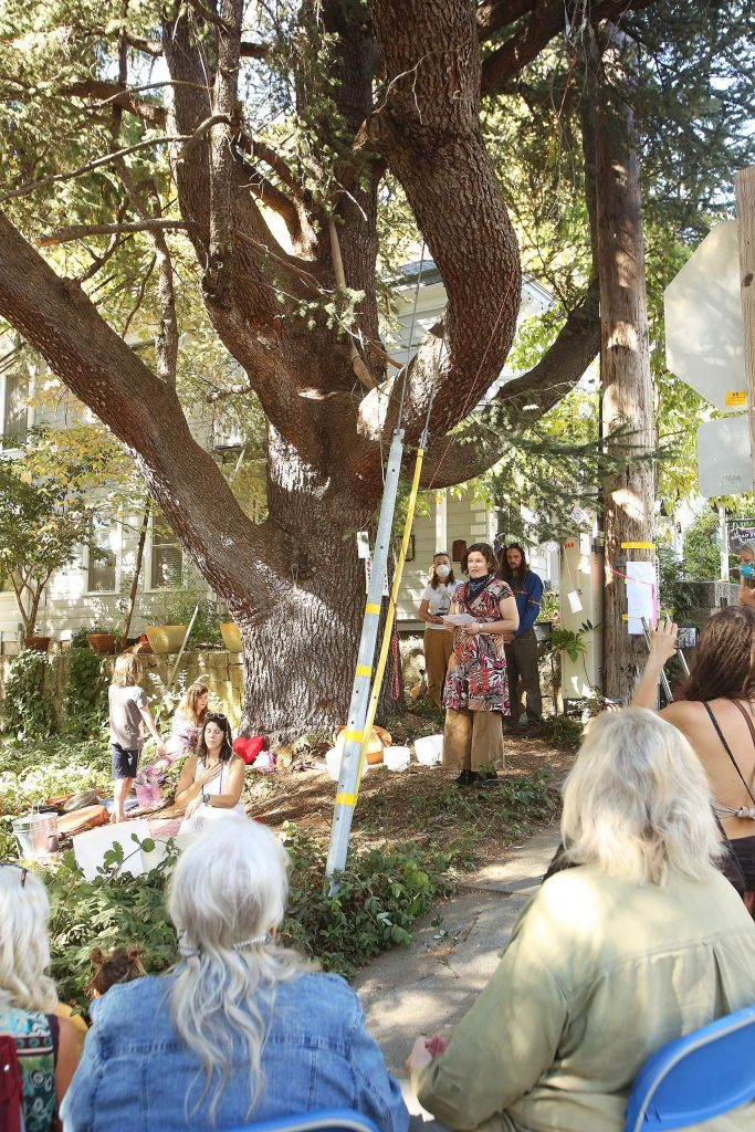 """About 30 people came to show their respects to """"Bella,"""" the 160-year-old blue Atlas cedar that will soon be cut down in Nevada City."""