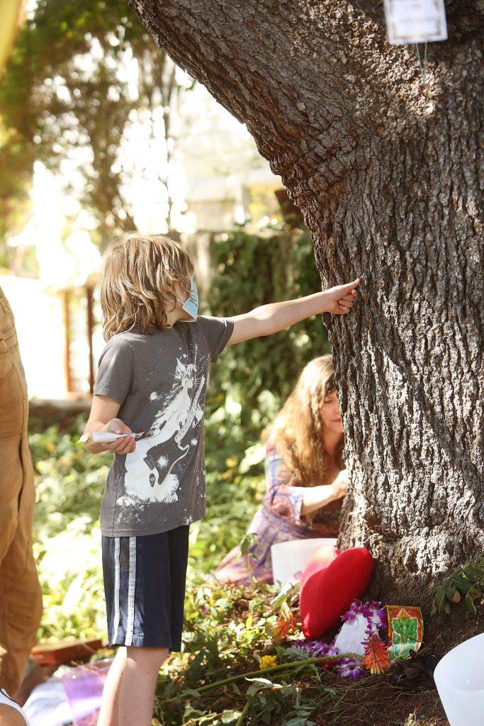 Children interact with the 160-year-old blue Atlas cedar in Nevada City that will soon be cut down.