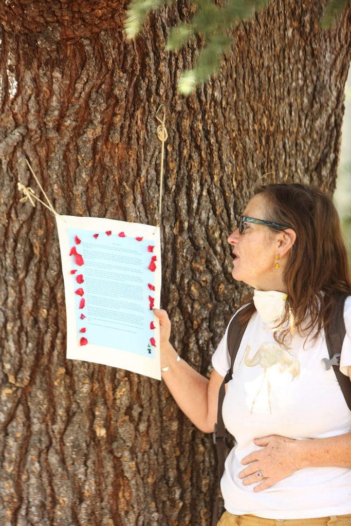 """Melanie Vesser reads a poem written by Nevada City's Lia Denae about """"Bella,"""" the blue Atlas cedar at the corner of Broad and Bennett streets. The tree was at the center of a protest against PG&E's plan to cut hundreds of trees in the city."""