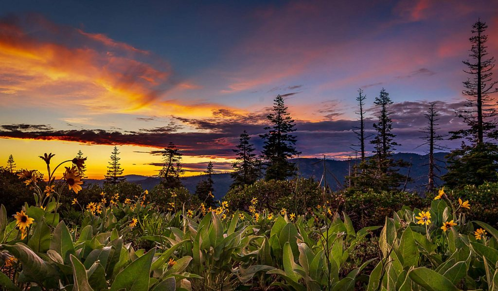 Bill Wages moved to Grass Valley in 2014 and became impassioned with the landscape, the abundance of flora and fauna and the easy accessibility to photograph nature in all her seasons.