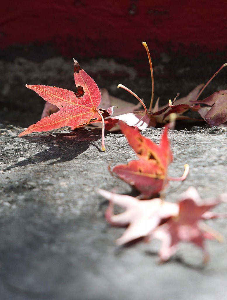 A few leaves have already begun to fall in Grass Valley's Glenbrook Basin shopping areas.