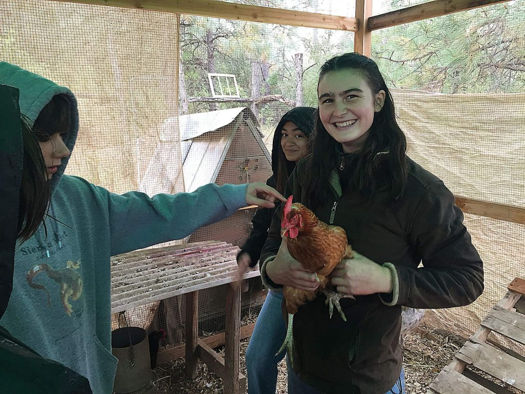 Maura Blair holds a Rhode Island Red chicken at Sierra Harvest's Food Love Farm in Nevada City last fall. The chicken and fellow hens worked their way into Maura's composition: The Garden's Lullaby. Kate Thoreson in background, Kieran Dickson reaching in.