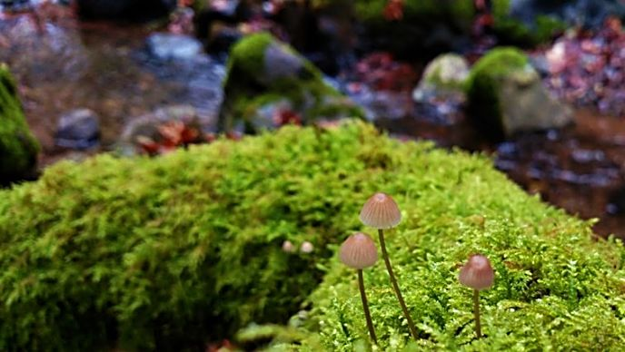 American Canyon Trail is where the mushrooms grow in thick moss carpets along the creek in winter. The variety of butterflies and wildflowers are worth the four-mile hike in spring. The color display in fall makes a return trip a must.