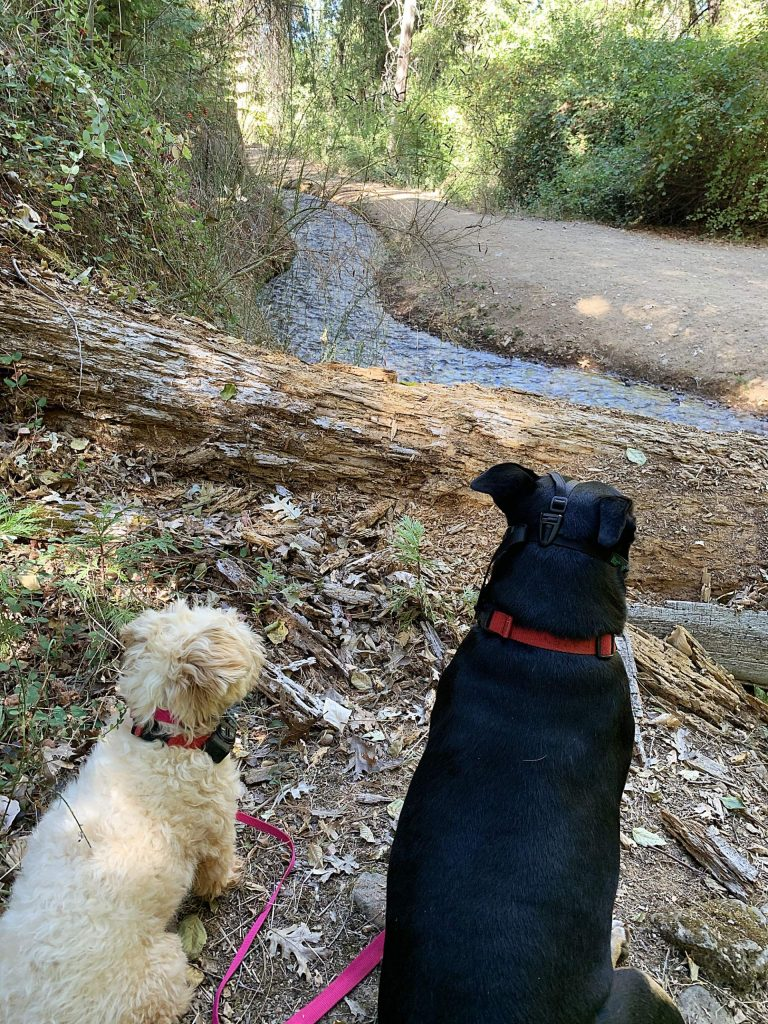 Fur friends leashed on NID trail. One wears a muzzle, the other a bark collar.