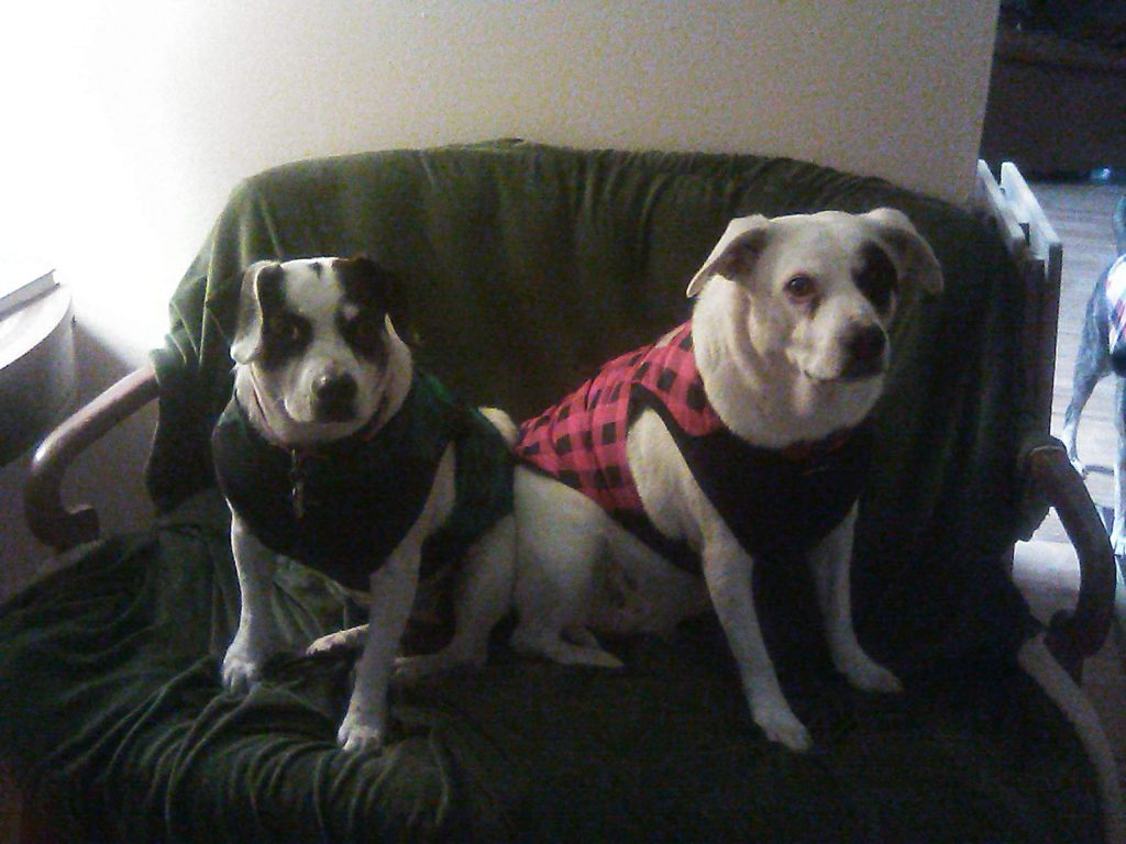Fur babies Bonnie and Betsy Ross are ready for colder temps.
