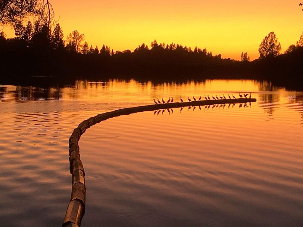 Birds in a row at Lake of the Pines.