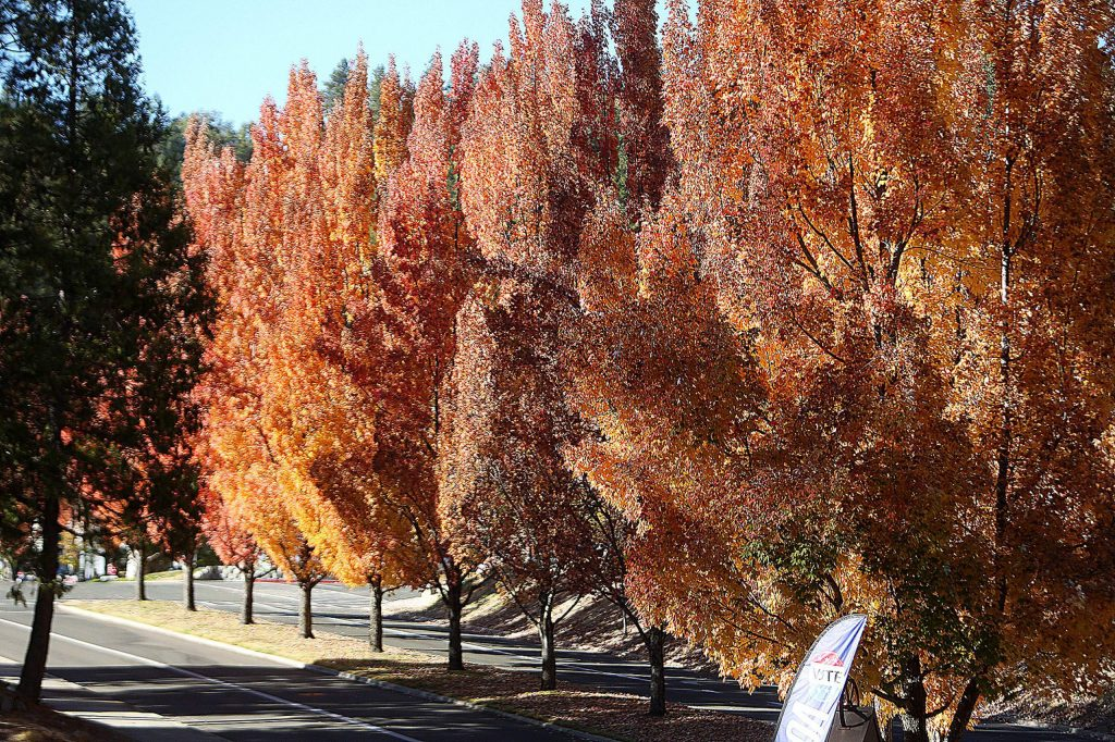 The fall colors are on full display along Maidu Avenue in Nevada City.