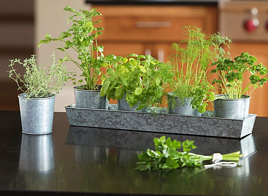 An edible herbal centerpiece allows guests to snip herbs to season their meal.